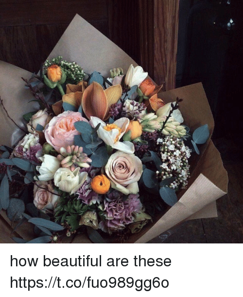Beautiful, Girl Memes, and How: how beautiful are these https://t.co/fuo989gg6o