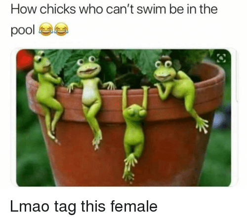 Funny, Lmao, and Pool: How chicks who can't swim be in the  pool  av Lmao tag this female
