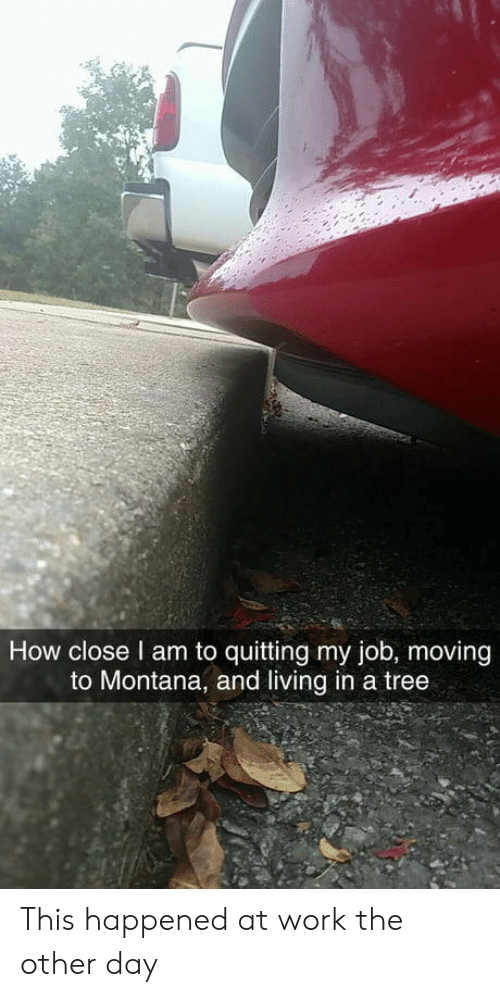 Work, Montana, and Tree: How close l am to quitting my job, moving  to Montana, and living in a tree This happened at work the other day