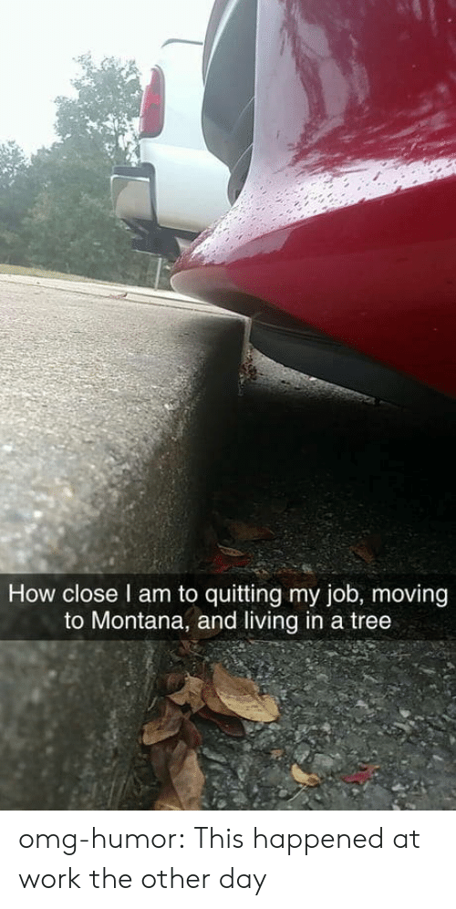 Omg, Tumblr, and Work: How close l am to quitting my job, moving  to Montana, and living in a tree omg-humor:  This happened at work the other day