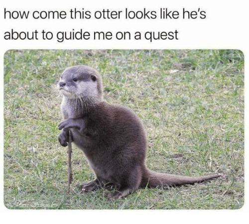 Memes, Quest, and 🤖: how come this otter looks like he's  about to guide me on a quest