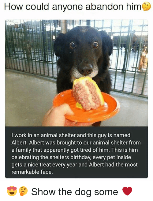 Apparently, Birthday, and Family: How could anyone abandon him  I work in an animal shelter and this guy is named  Albert. Albert was brought to our animal shelter from  a family that apparently got tired of him. This is him  celebrating the shelters birthday, every pet inside  gets a nice treat every year and Albert had the most  remarkable face. 😍🤔 Show the dog some ❤️