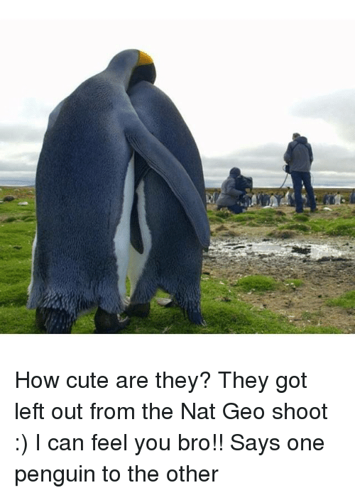 Cute, Penguin, and How: How cute are they? They got left out from the Nat Geo shoot :)  I can feel you bro!! Says one penguin to the other