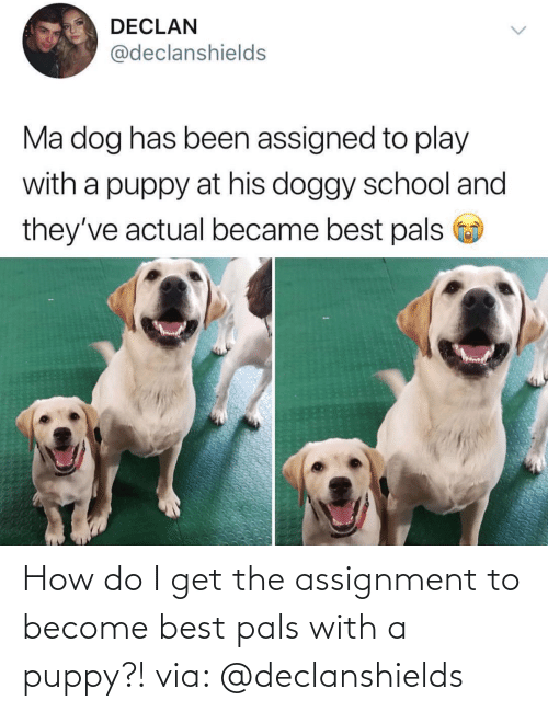 Best, Puppy, and How: How do I get the assignment to become best pals with a puppy?!via: @declanshields