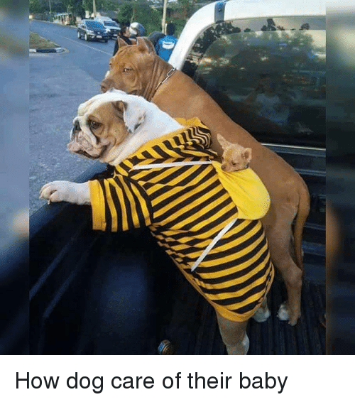 How Dog Care Of Their Baby Baby It S Cold Outside Meme On Me Me