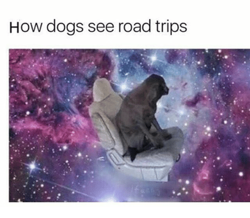 Dogs Memes And How See Road Trips
