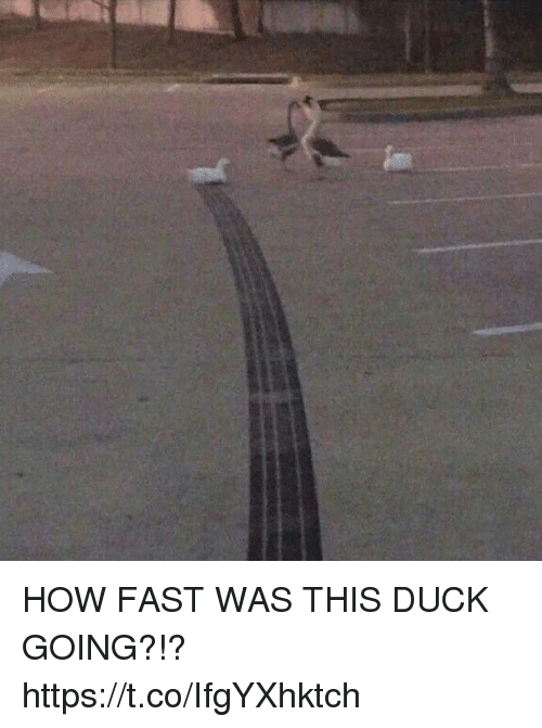 Funny, Duck, and How: HOW FAST WAS THIS DUCK GOING?!? https://t.co/IfgYXhktch