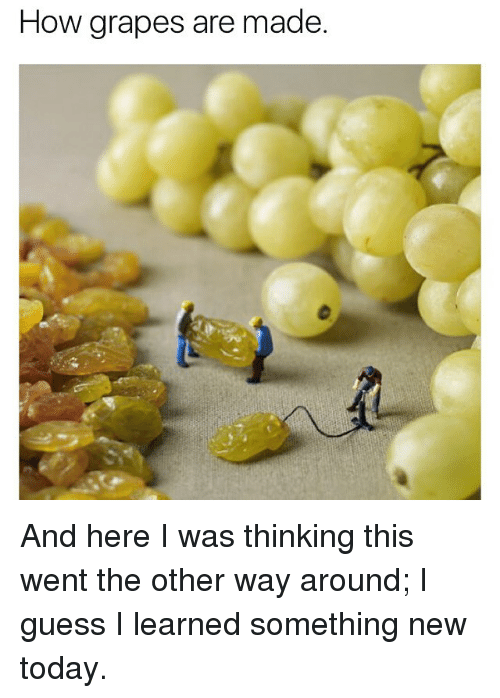 Memes, Guess, and Today: How grapes are made And here I was thinking this went the other way around; I guess I learned something new today.