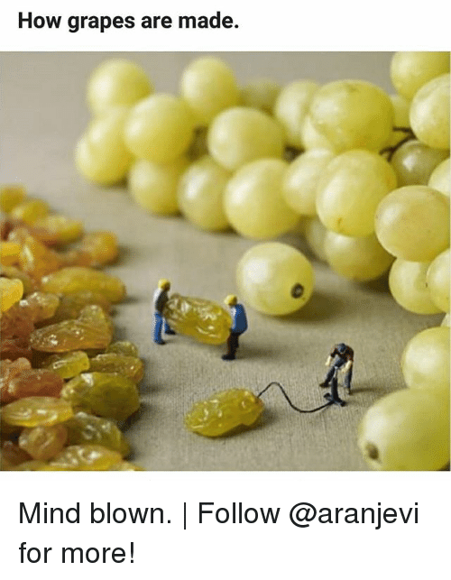 Memes, Mind, and 🤖: How grapes are made. Mind blown. | Follow @aranjevi for more!