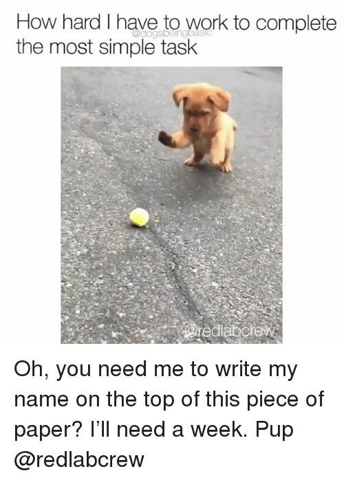Memes, Work, and Pup: How hard I have to work to complete  the most simple task Oh, you need me to write my name on the top of this piece of paper? I'll need a week. Pup @redlabcrew