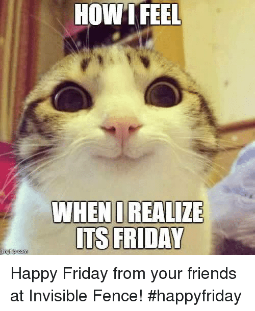 Friday, Friends, and It's Friday: HOW HOW I FEEL  WHEN I REALIZE  ITS FRIDAY  com Happy Friday from your friends at Invisible Fence! #happyfriday