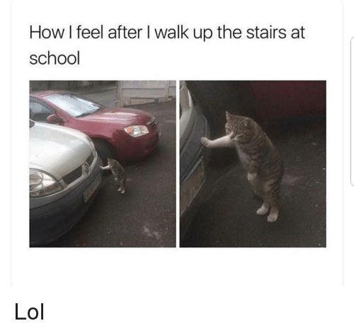 Lol, Memes, and School: How I feel after I walk up the stairs at  school Lol