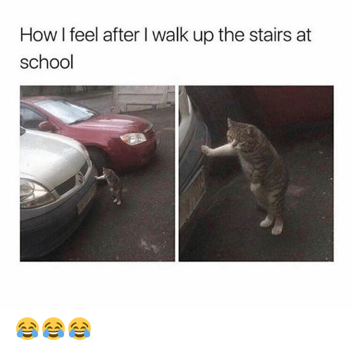 How I Feel After I Walk Up The Stairs At School School Meme