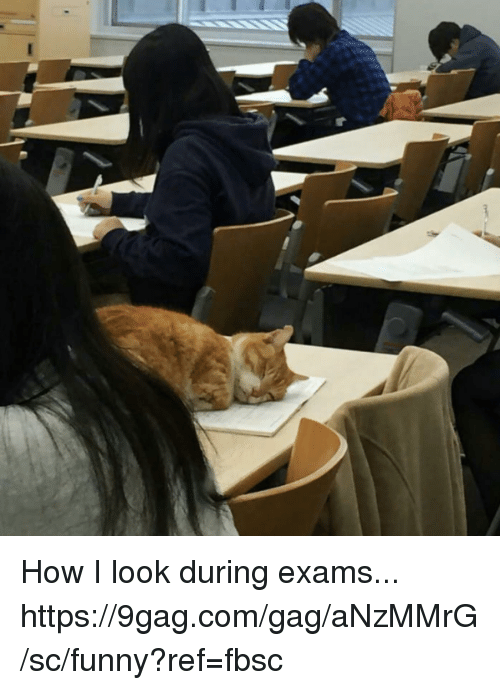 9gag, Dank, and Funny: How I look during exams... https://9gag.com/gag/aNzMMrG/sc/funny?ref=fbsc