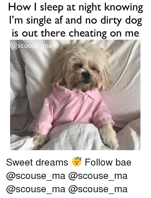 Af, Bae, and Cheating: How I sleep at night knowing  l'm single af and no dirty dog  is out there cheating on me  scouse ma Sweet dreams 😴 Follow bae @scouse_ma @scouse_ma @scouse_ma @scouse_ma