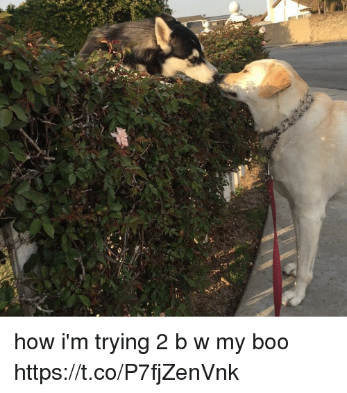 Boo, Girl Memes, and How: how i'm trying 2 b w my boo https://t.co/P7fjZenVnk