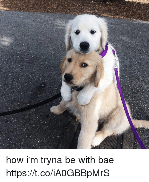 Bae, Girl Memes, and How: how i'm tryna be with bae https://t.co/iA0GBBpMrS
