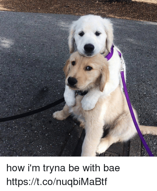 Bae, Girl Memes, and How: how i'm tryna be with bae https://t.co/nuqbiMaBtf