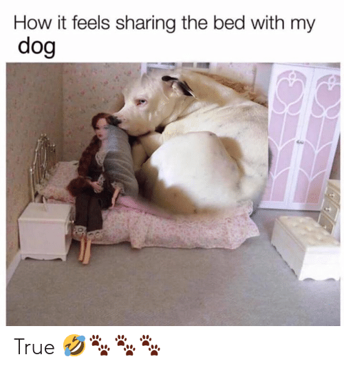 Memes, True, and 🤖: How it feels sharing the bed with my  dog True 🤣🐾🐾🐾