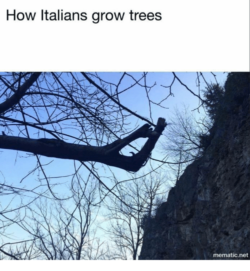 Trees, Dank Memes, and How: How Italians grow trees  mematic net
