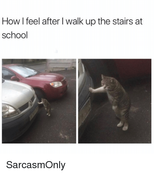Funny, Memes, and School: How l feel after l walk up the stairs at  school SarcasmOnly