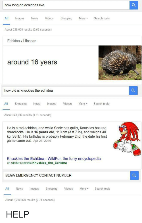 Andrew Bogut, Birthday, and News: how long do echidnas live  All Images News VideosShopping MoreSearch tools  About 238,000 results (0.56 seconds)  Echidna / Lifespan  around 16 years  how old is knuckles the echidna  All Shopping News Images Videos More Search tools  About 241,000 results (0.61 seconds)  He is a red echidna, and while Sonic has quills, Knuckles has red  dreadlocks. He is 16 years old, 110 cm (3 ft 7 in), and weighs 40  kg (88 lb). His birthday is probably February 2nd, the date his first  game came out. Apr 26, 2016  Knuckles the Echidna WikiFur, the furry encyclopedia  en wikifur.com/wiki/Knuckles the Echidna  SEGA EMERGENCY CONTACT NUMBER  All News Images Shopping Videos MoreSearch tools  About 2,210,000 results (0.74 seconds) <p>HELP</p>