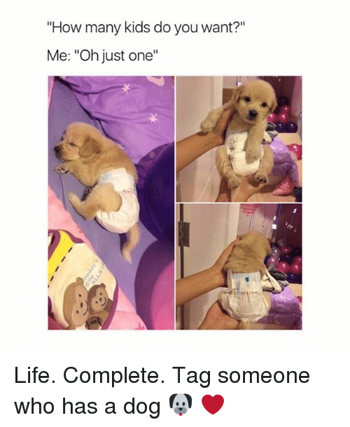 "Life, Girl, and Kids: ""How many kids do you want?""  Me: ""Oh just one""  ·リ Life. Complete. Tag someone who has a dog 🐶 ❤️"