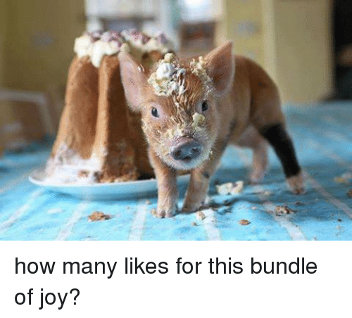 Bundle Of Joy