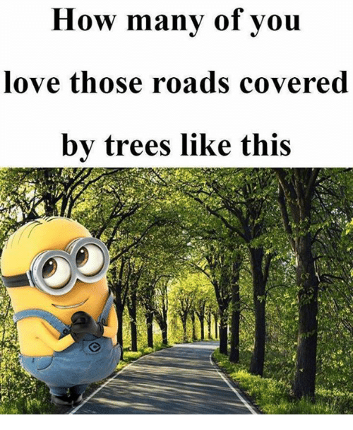 Love, Memes, and Trees: How many of vou  love those roads covered  by trees like this
