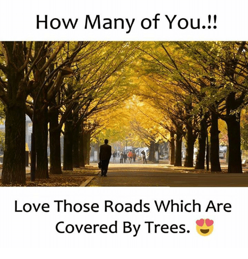 Love, Trees, and How: How Many of You  Love Those Roads Which Are  Covered By Trees.  tS