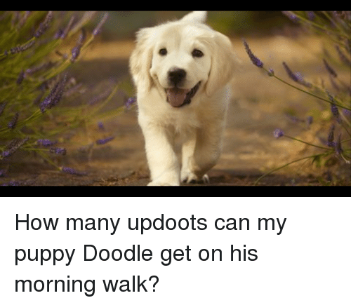 Doodle, Puppy, and How
