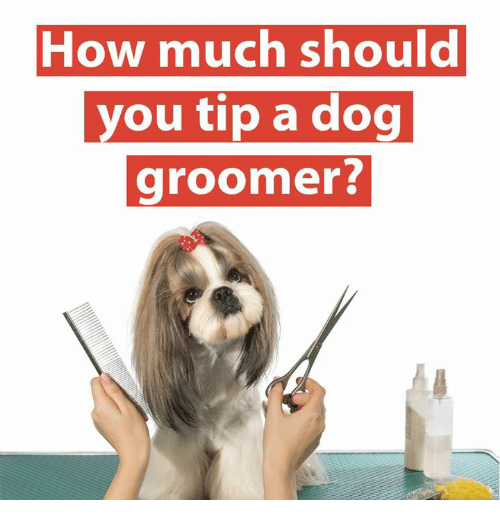 25+ Best Memes About Dog Groomer