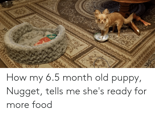 Food, Puppy, and Old: How my 6.5 month old puppy, Nugget, tells me she's ready for more food