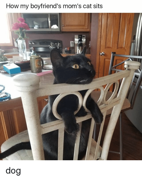Moms, How, and Dog: How my boyfriend's mom's cat sits dog