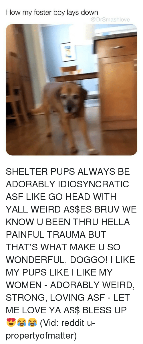 Bless Up, Head, and Lay's: How my foster boy lays down  @DrSmashlove SHELTER PUPS ALWAYS BE ADORABLY IDIOSYNCRATIC ASF LIKE GO HEAD WITH YALL WEIRD A$$ES BRUV WE KNOW U BEEN THRU HELLA PAINFUL TRAUMA BUT THAT'S WHAT MAKE U SO WONDERFUL, DOGGO! I LIKE MY PUPS LIKE I LIKE MY WOMEN - ADORABLY WEIRD, STRONG, LOVING ASF - LET ME LOVE YA A$$ BLESS UP 😍😂😂 (Vid: reddit u-propertyofmatter)