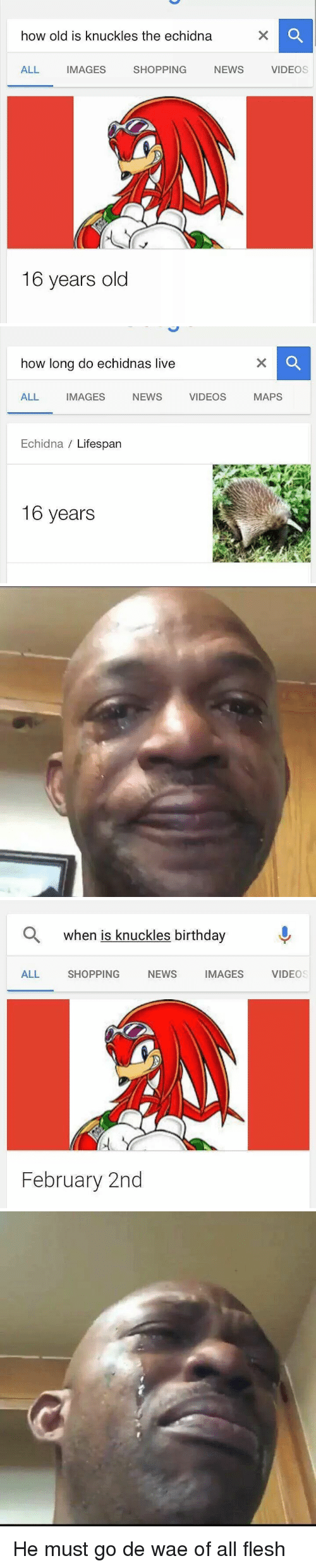 Birthday, News, and Shopping: how old is knuckles the echidna  ALL IMAGES SHOPPING NEWS VIDEOS  16 years old   how long do echidnas live  ALL  IMAGES  NEWS  VIDEOS  MAPS  Echidna Lifespan  16 years   Q when is knuckles birthday  ALL SHOPPING NEWS IMAGES VIDEOS  February 2nd <p>He must go de wae of all flesh</p>
