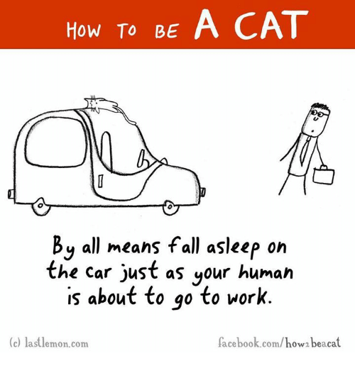 How to be a cat by all means fall asleep on the car just as your facebook fall and memes how to be a cat by all means fall ccuart Choice Image