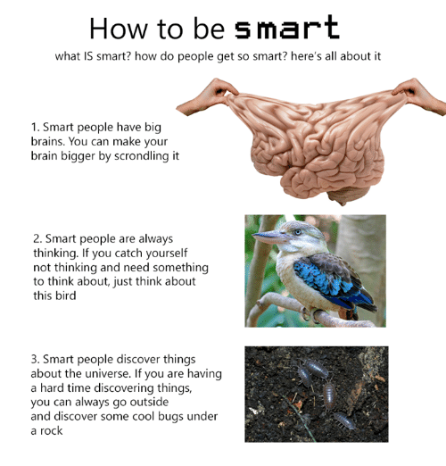 Brains, Dank, and Brain: How to be smart  what is smart? how do people get so smart? here's all about it  1. Smart people have big  brains. You can make your  brain bigger by scr  it  2. Smart people are always  thinking. If you catch yourself  not thinking and need something  to think about, just think about  this bird  3. Smart people discover things  about the universe. If you are having  a hard time discovering things,  you can always go outside  and discover some cool bugs under  a rock