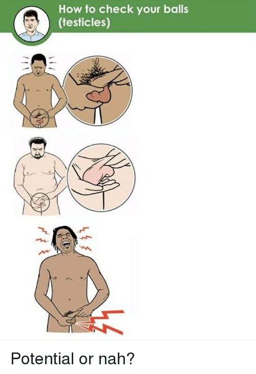 How To, How, and Check: How to check your balls  (testicles) Potential or nah?