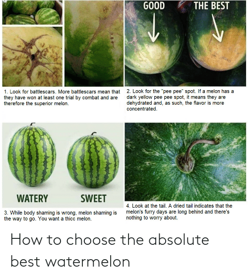 Best, How To, and How: How to choose the absolute best watermelon