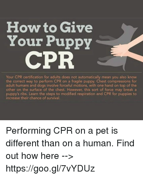 How To Give Your Puppy Cpr Your Cpr Certification For Adults Does