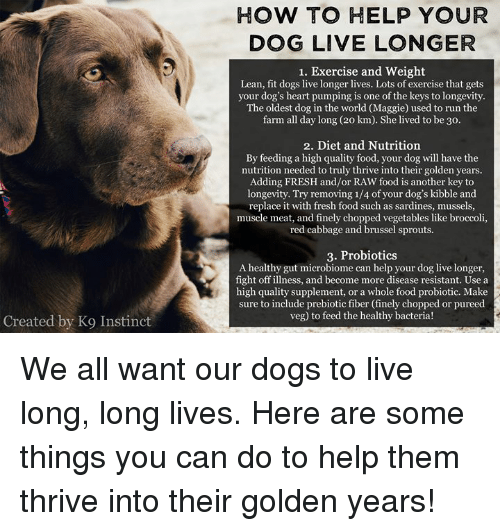 Dogs, Food, and Fresh: HOW TO HELP YOUR  DOG LIVE LONGER  1. Exercise and Weight  Lean, fit dogs live longer lives. Lots of exercise that gets  your dog's heart pumping is one of the keys to longevity.  The oldest dog in the world (Maggie) used to run thee  farm all day long (20 km). She lived to be 3o.  2. Diet and Nutrition  By feeding a high quality food, your dog will have the  nutrition needed to truly thrive into their golden years.  Adding FRESH and/or RAW food is another key to  longevity. Try removing 1/4 of your dog's kibble and  replace it with fresh food such as sardines, mussels,  muscle meat, and finely chopped vegetables like broccoli,  red cabbage and brussel sprouts.  3. Probiotics  A healthy gut microbiome can help your dog live longer,  fight off illness, and become more disease resistant. Use a  high quality supplement, or a whole food probiotic. Make  sure to include prebiotic fiber (finely chopped or pureed  veg) to feed the healthy bacteria!  Created by K9 Instinct We all want our dogs to live long, long lives. Here are some things you can do to help them thrive into their golden years!