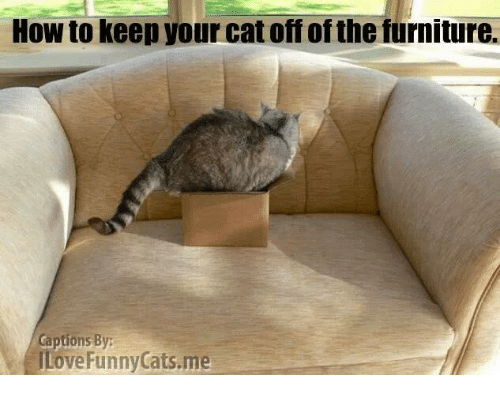 25 Best Memes About Funny Cats Funny Cats Memes