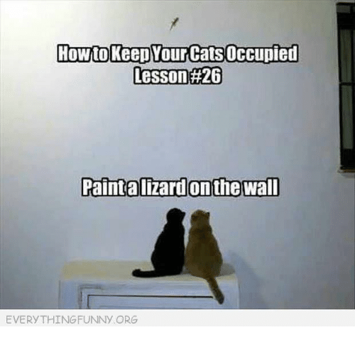 How To Keep Yourcats Occupied Lesson 26 Paint Alizardon The Wall