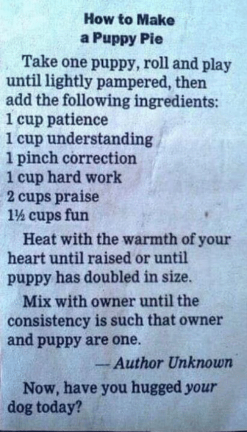 Memes, Work, and Heart: How to Make  a Puppy Pie  Take one puppy, roll and play  until lightly pampered, then  add the following ingredients:  1 cup patience  1 cup understanding  1 pinch correction  1 cup hard work  2 cups praise  1% cups fun  Heat with the warmth of your  heart until raised or until  puppy has doubled in size.  Mix with owner until the  consistency is such that owner  and puppy are one.  -Author Unknown  Now, have you hugged your  dog today?
