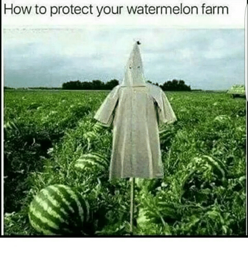 How To Protect Your Watermelon Farm  Meme On Meme. Issue Tracking System Free U S History Class. San Diego Labor Attorney Ip Monitoring Camera. Server And Application Monitoring Software. Business Administration Logo Vw Coffee Van. Property Management Chandler. Corrective Surgery For Scoliosis. Carpet Cleaning Kingwood Factory Reset Laptop. Screen Sharing Mac To Pc 6x9 Postcard Printing