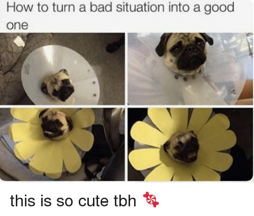 Turning A Bad Situation Into A Good One Quotes: How To Turn A Bad Situation Into A Good One This Is So