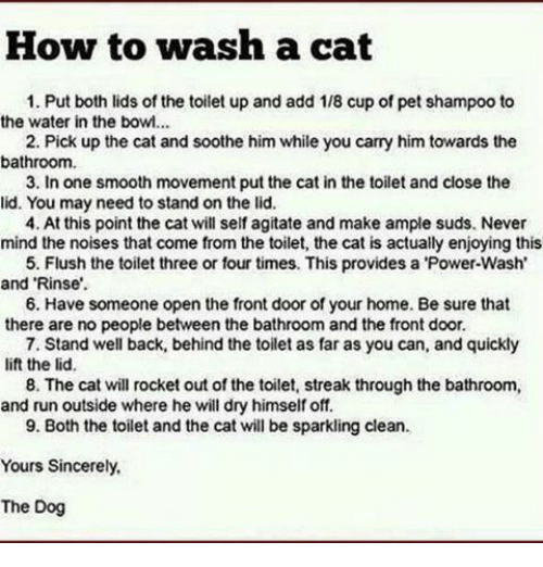 """Memes, 🤖, and Powers: How to wash a cat  1. Put both lids of the toilet up and add 1/8 cup of pet shampoo to  the water in the bowl...  2. Pick up the cat and soothe him while you carry him towards the  bathroom.  3. In one smooth movement put the cat in the toilet and close the  lid. You may need to stand on the lid.  4. At this point the cat will self agitate and make ample suds. Never  mind the noises that come from the toilet, the cat is actually enjoying this  5. Flush the toilet three or four times. This provides a 'Power-Wash'  and """"Rinse.  6. Have someone open the front door of your home. Be sure that  there are no people between the bathroom and the front door.  7. Stand well back, behind the toilet as far as you can, and quickly  lift the lid.  8. The cat will rocket out of the toilet, streak through the bathroom,  and run outside where he will dry himself off.  9. Both the toilet and the cat will be sparkling clean.  Yours Sincerely,  The Dog"""