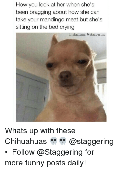 crying chihuahua meme how you look at her when she s been bragging about how she 6051