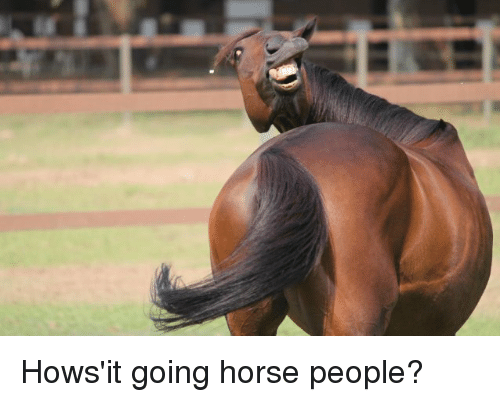 Weird Horse Pictures 7